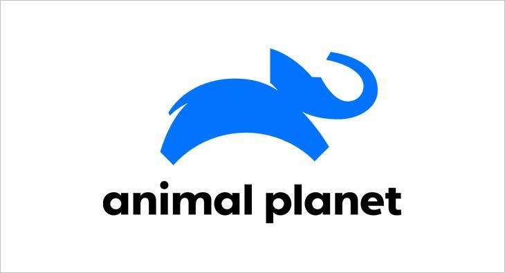 36---Animal-Planet